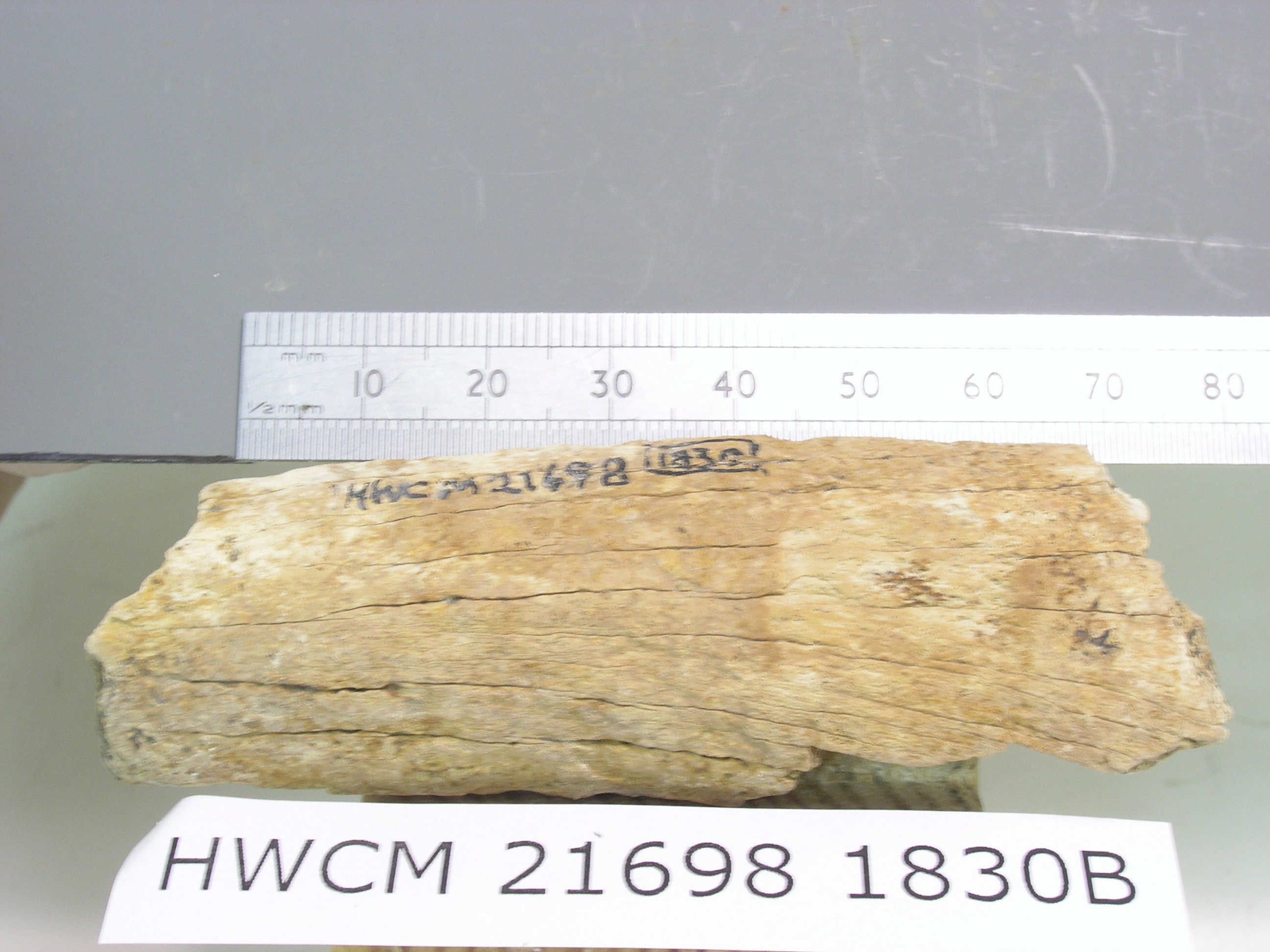 carbon dating ivory New method could revolutionize dating of ancient treasures date:  conventional carbon dating estimates the age of an artifact based on its content of carbon-14 (c-14), a naturally occurring .