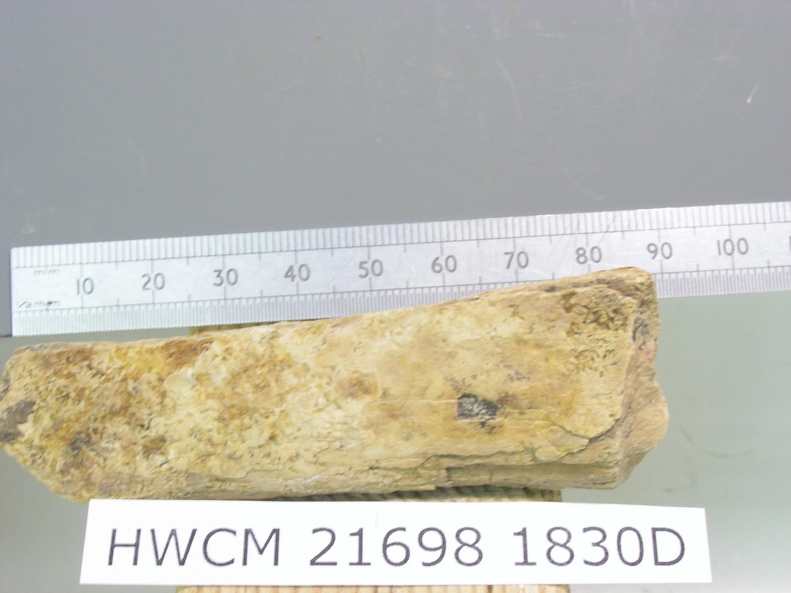 Bone radiocarbon dating