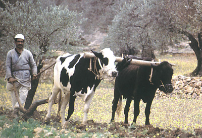 http://archaeologydataservice.ac.uk/archives/view/stock_ahrc_2012/images/cows.jpg