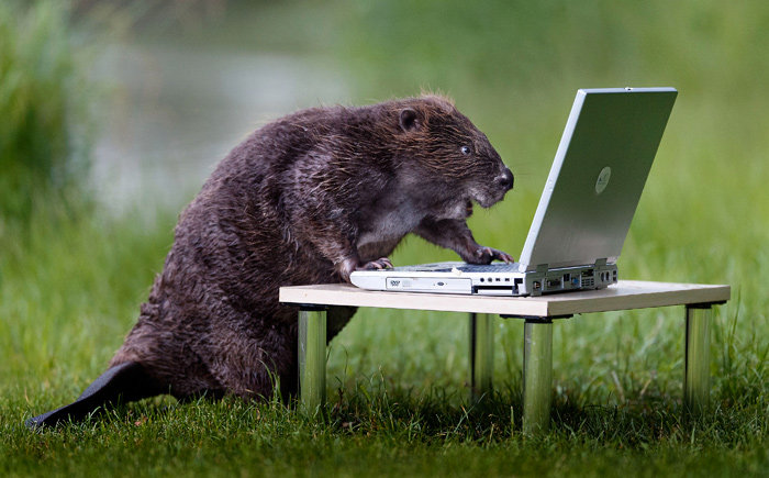 Image of beaver working on computer. Highlighting that ADS staff have been working like beavers to improve the ADS easy and OASIS images systems.